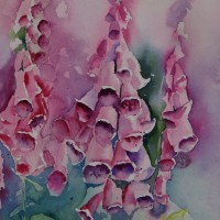 Foxgloves in watercolour