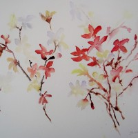 Blossom flowers in Watercolour