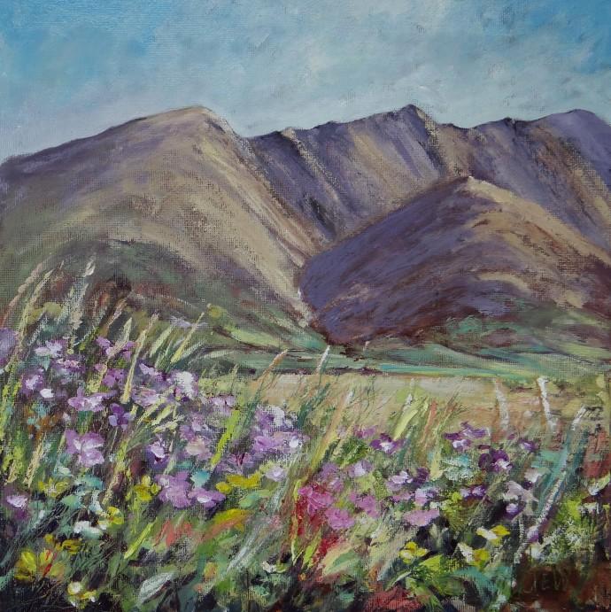 wildflowers-blencathra